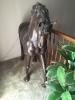 bronze-horse-1426303184.jpg